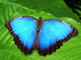 butterfly free pictures on pixabay
