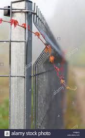 closeup on metal rod fence with climbing plants stock photo