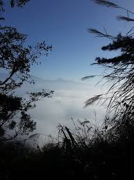 free photo fog mountaineer views morning news expensive trees