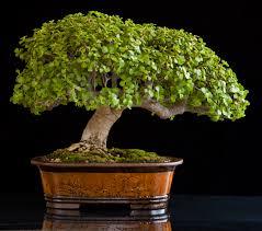 pot bonsai design how to make a bonsai tree