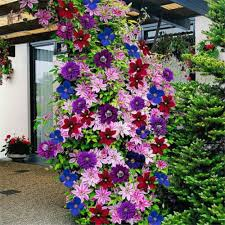 online buy wholesale climbing plant seeds from china climbing