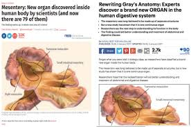 The Human Anatomy Pictures A New Organ Has Not Been Discovered In The Human Body