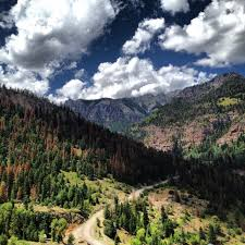 Colorado forest images Pine beetles summit county citizens voice jpg