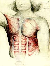 Google Human Anatomy Tutoriales De Dibujo Anatomia Humana Buscar Con Google
