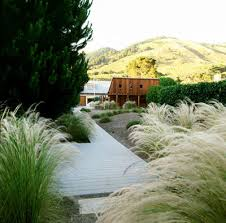 8 ornamental grasses for coastal gardens