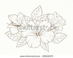 lily hibiscus flowers garland bouquet floral stock vector