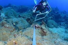 project chompin parrotfish nutrients and the coral microbiome