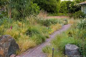 gardening with native plants dry summer