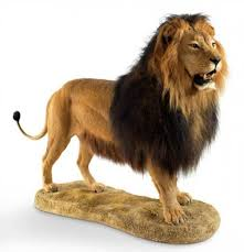 lions for sale lion by northeast taxidermy studios taxidermy mounts