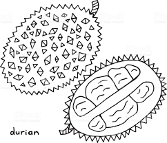 durian coloring page graphic vector black and white art for