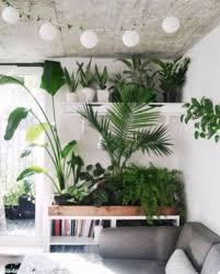 indoor plant display 53 amazing ideas to display your indoor plants besideroom com
