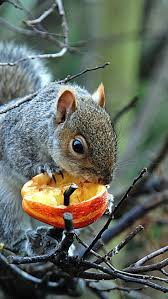469 best who are you squirrels images on pinterest rodents