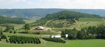 virginia tree farms virginia is for lovers
