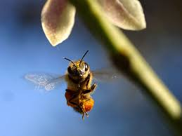 utah state insect honey bee