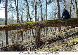sedere rotto donna vecchio sedere muschioso albero rotto collina