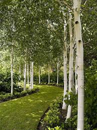 Best 10 Small Backyard Landscaping by Best 25 Backyard Trees Ideas On Pinterest Fence Trees Privacy
