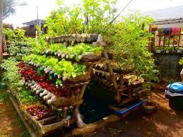 Backyard Food Garden - Backyard vegetable garden designs