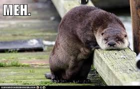 Meh Meme - an otter one of those days animal capshunz funny animals