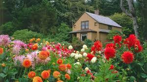 bumper harvest fascinating flowers for home garden on interior