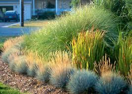 icangarden gardening resource site