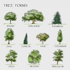 landscaping trees the diagram shows different forms of trees