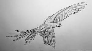 light fever u0027s drawing tutorial scarlet macaw time lapse youtube