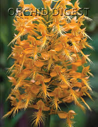 orchid pictures the orchid digest publication