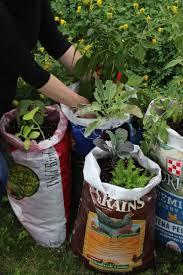 how to make a feedbag garden