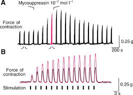 the peptide hormone pqdldhvflrfamide crustacean myosuppressin