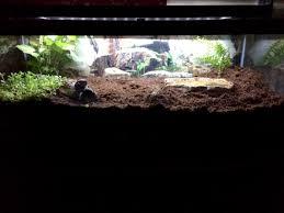 terrarium set up for tiger salamanders aquariums