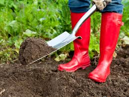 What To Plant In Your Vegetable Garden by 5 Steps To Starting A Vegetable Garden