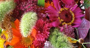 flowers u2014 garden city harvest