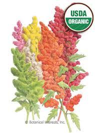 botanical sts quinoa brightest brilliant rainbow organic seeds botanical