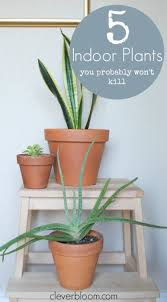 Easy To Care For Indoor Plants 5 Indoor Plants You Probably Won U0027t Kill Clever Bloom