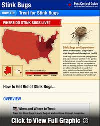 how to get rid of stink bugs control u0026 treatment guide