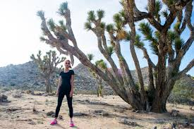 desert flora and beyond 10 tips for a surreal joshua tree