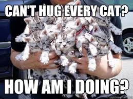Cat Hug Meme - can t hug every cat how am i doing so many cats quickmeme