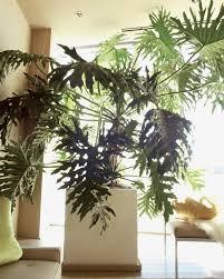 House Plant Ideas by Houseplant Ideas Home Design Ideas
