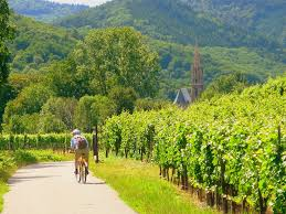 5 regions of france ideal for cycling wine tours