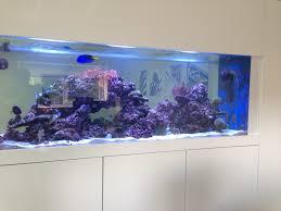 in wall fish tanks aquarium fish tank filter mounted fish bow gallery images of the beautiful wall aquarium options