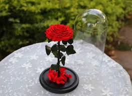 rose in glass preserved rose in glass dome red rose flower for gift home