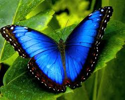lifetime pic of butterfly 55 colorful hd free images wallpapers