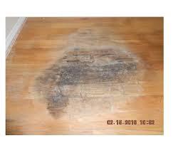 carpet wood floor no more servpro of sarasota