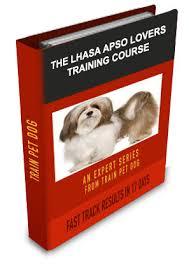 lhasa apso training learn all about training lhasa apsos u0026 taking