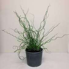 plant stand standing plant hooksstanding hangers light planter