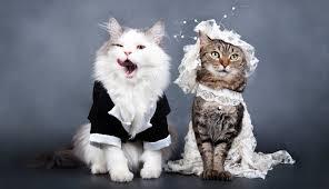 Dog Wedding Dress Pet Weddings How To Photograph Animals