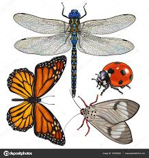 set of insects like dragonfly butterfly ladybird and moth