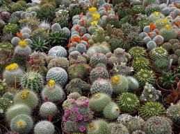 native northern california plants 6 drought tolerant plants for your property in chico ca