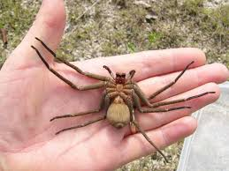 23 Funny Spider Memes Weneedfun - yesterday i was doing some yard work when i felt something crawling