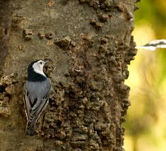 Audubon Backyard Bird Count by Great Backyard Bird Count Birmingham Zoo